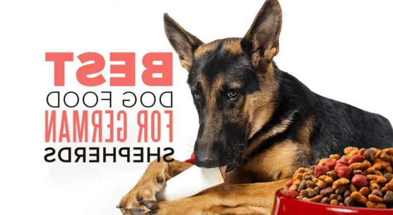 best cheap dog food for german shepherd