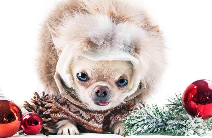 Chihuahua Christmas Ornaments Sale
