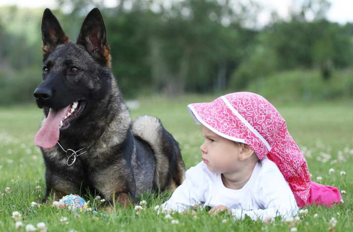 Buying a Trained German Shepherd or Adopt