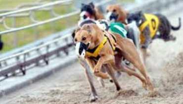 Greyhound Dog Track