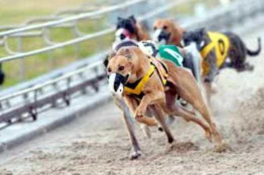 Greyhound Dog Track