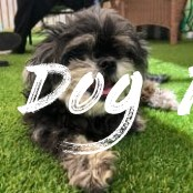 100+ Abandoned Dogs of Everglades Florida, Inc