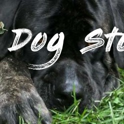 Seven Things To Know About Dog Stopped Eating Dry Food | Dog Stopped Eating Dry Food