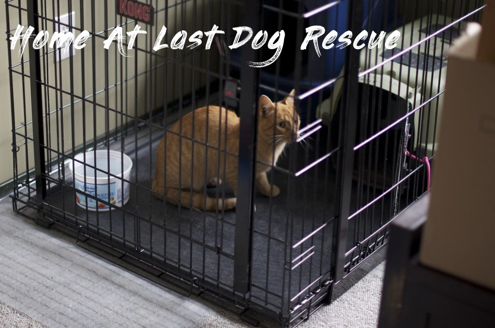 Caught in 60 seconds - Home At Last Dog Rescue