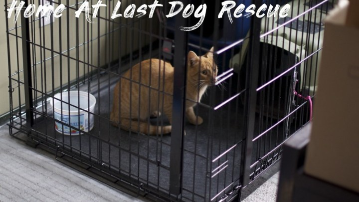 Seven Awesome Things You Can Learn From Home At Last Dog Rescue | Home At Last Dog Rescue