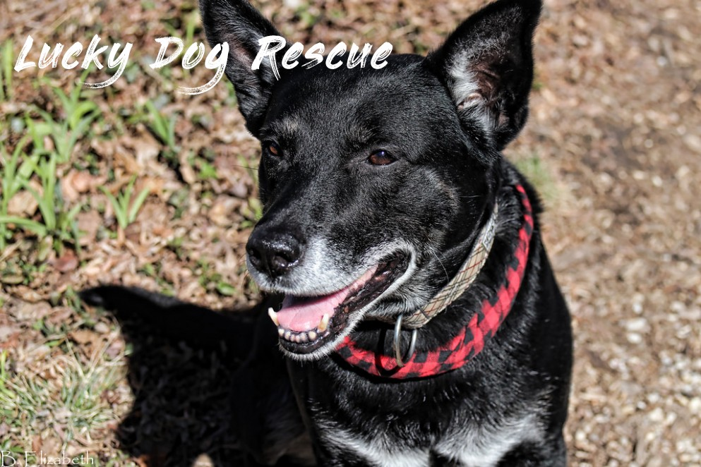 What You Know About Lucky Dog Rescue And What You Don't Know About Lucky Dog Rescue | Lucky Dog Rescue
