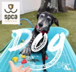 Dog & Puppy Adoptions  Animal Rescue Shelter  SPCA Tampa Bay - Dog Rescue Florida