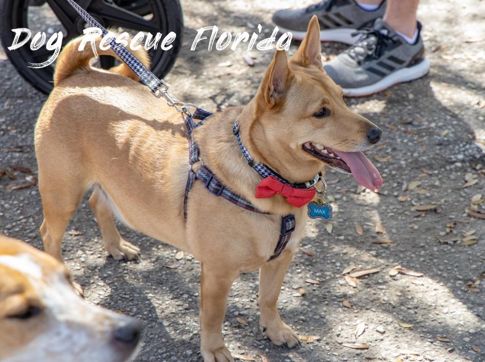 Dog Rescue Event - Dog Rescue Florida