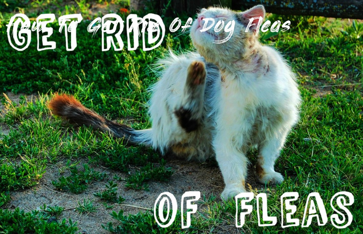 Learn All About How To Get Rid Of Dog Fleas From This Politician | How To Get Rid Of Dog Fleas