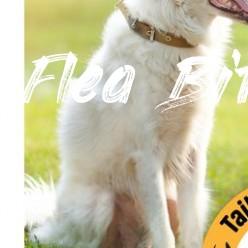Pet Valu Dog Circular - Aug 12 to Aug 12 - Flea Bites On Dogs