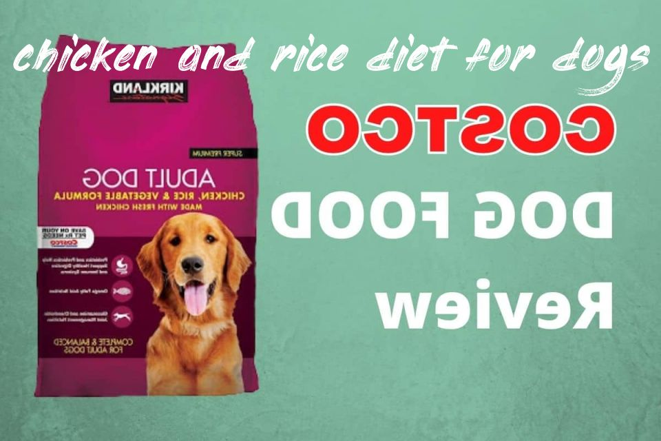 All you need to know about chicken and rice diet for dogs ratio