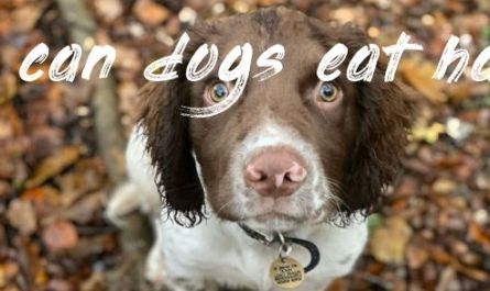 Things you should know can dogs eat ham uk