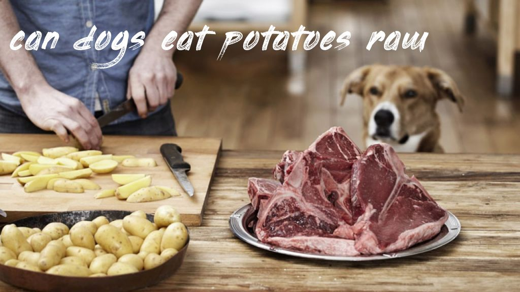 Question about can dogs eat potatoes raw