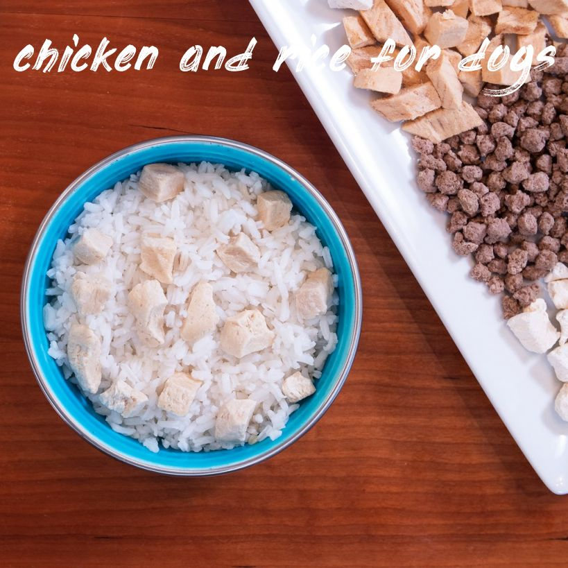 Things you should know chicken and rice for dogs upset tummy