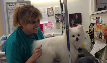 best friend dog grooming Review