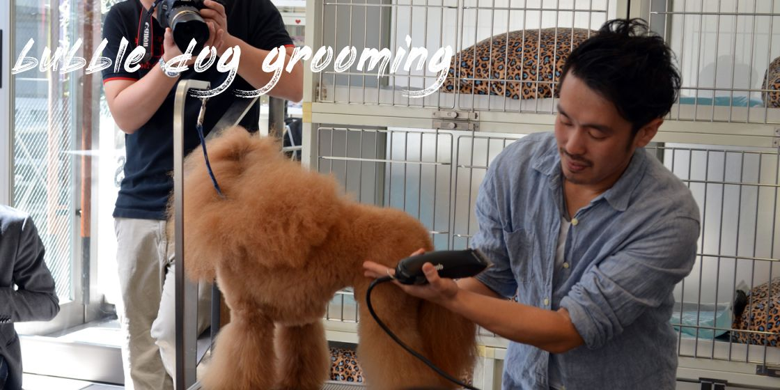 Bubble Dog Grooming Where To Find
