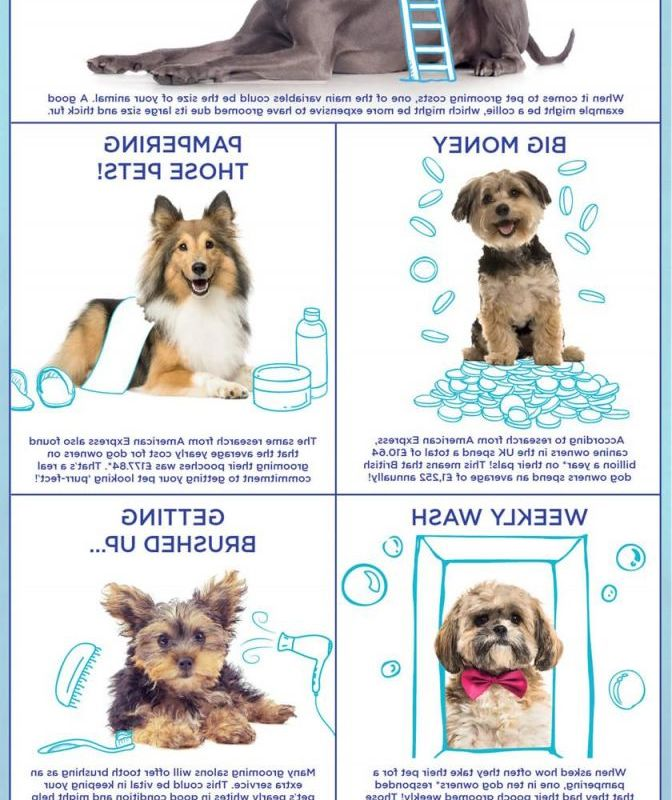 Cost For Dog Grooming Overview