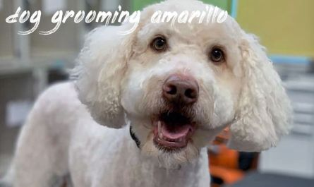 dog grooming amarillo Price