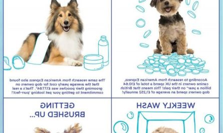 dog grooming cost Buyer Guide