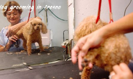 dog grooming in fresno Cost