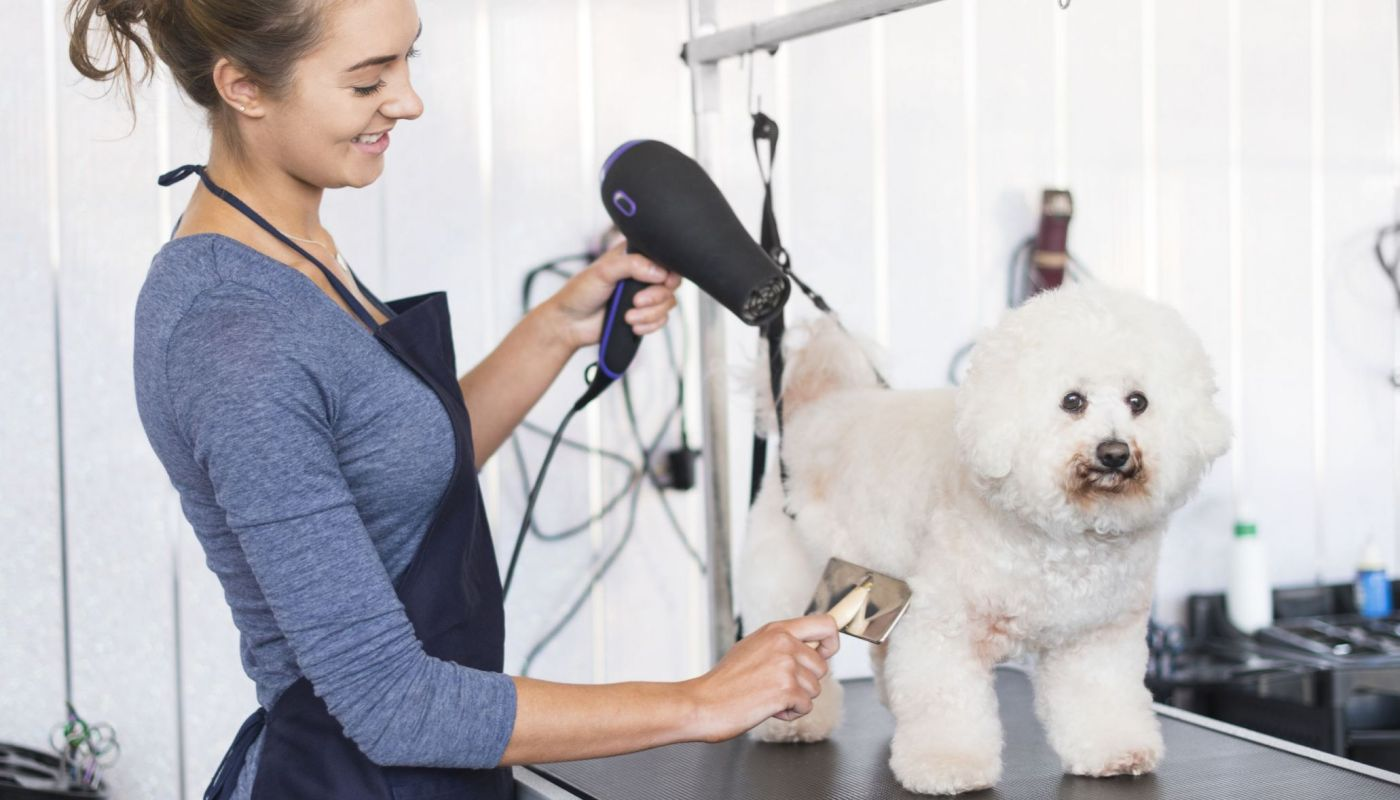 Dog Grooming Job Near Me Recommended