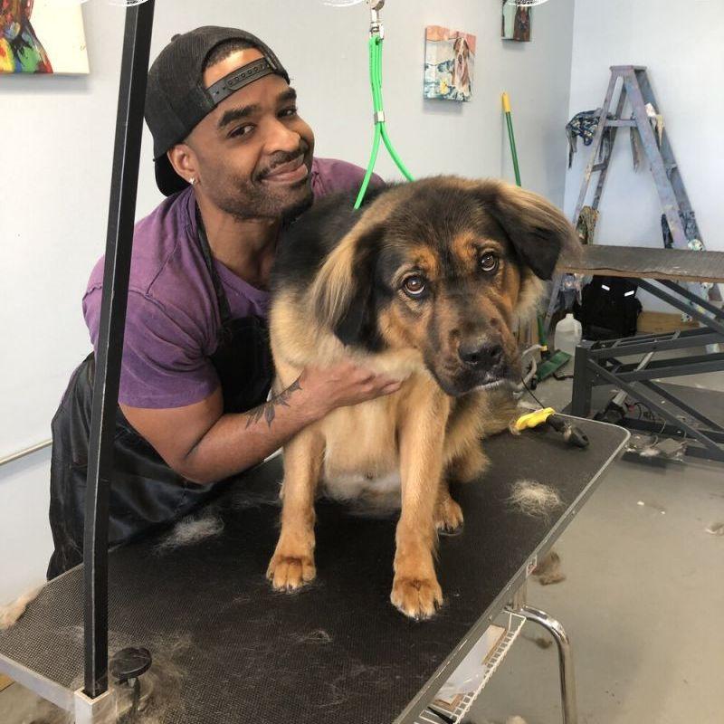 dog grooming lexington ky Price