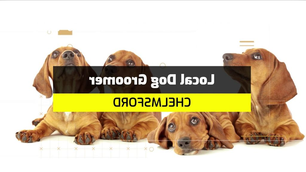 dog grooming local Overview