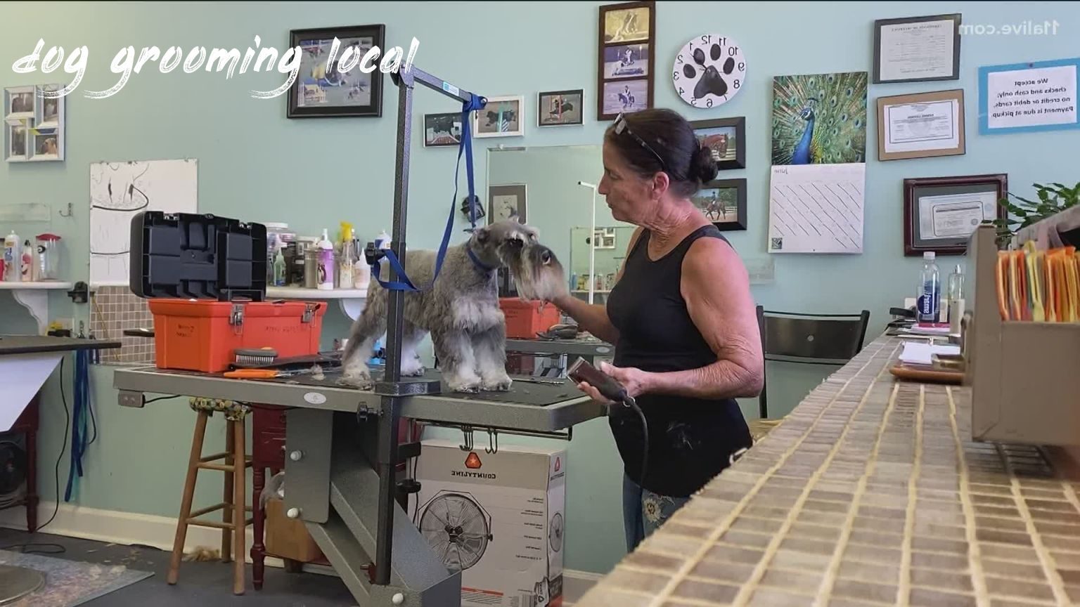 dog grooming local Review