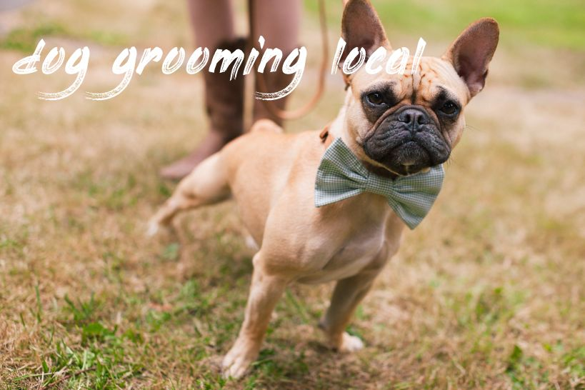 dog grooming local Cost