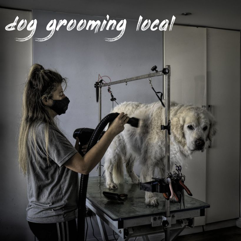 dog grooming local Price