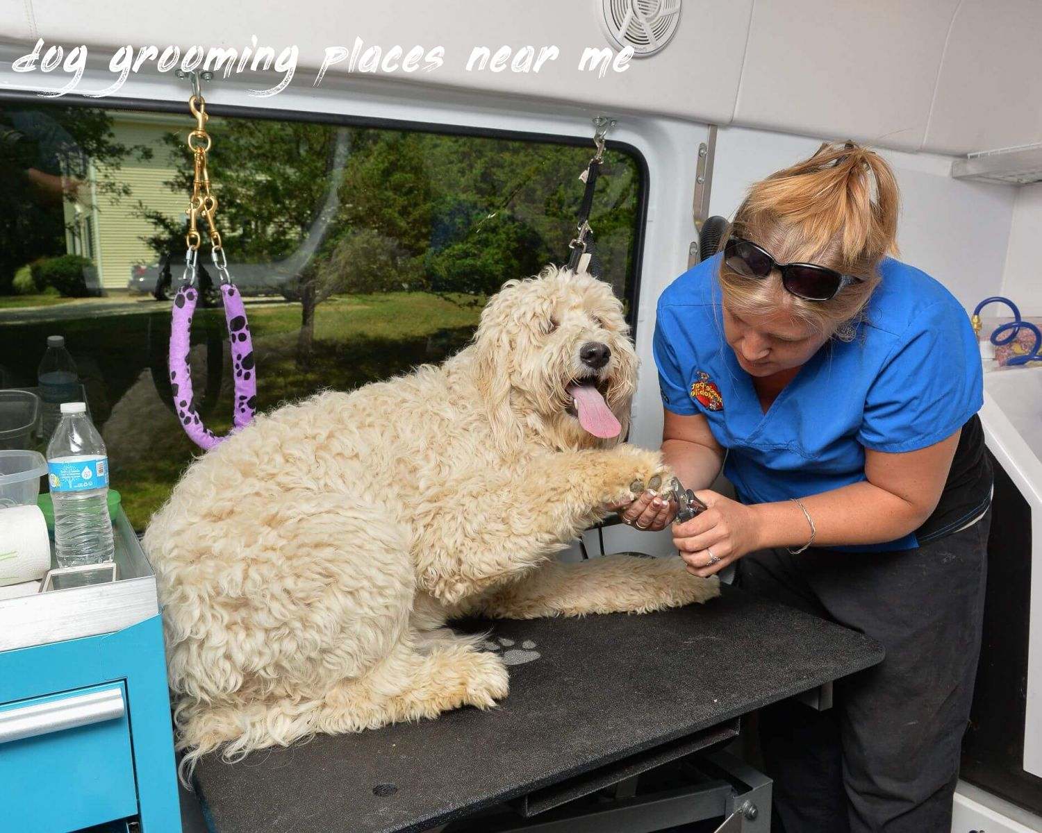 dog grooming places near me Review