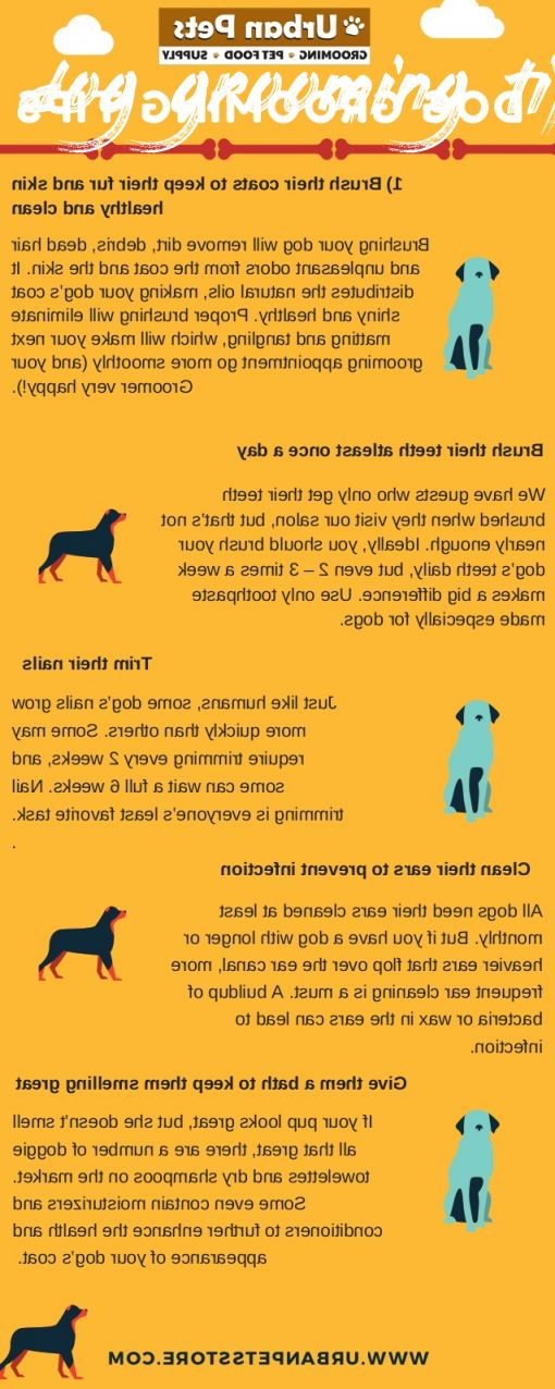 dog grooming tips Cost