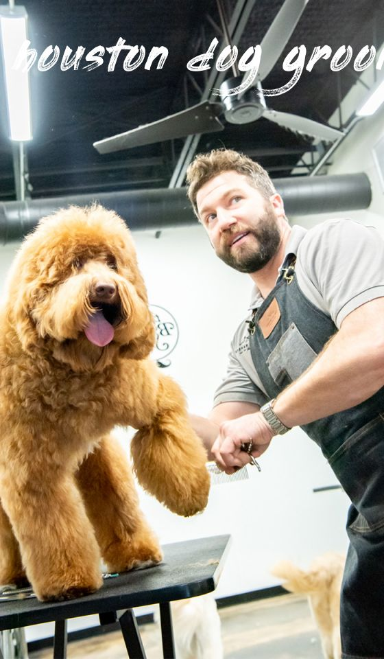 houston dog grooming Overview
