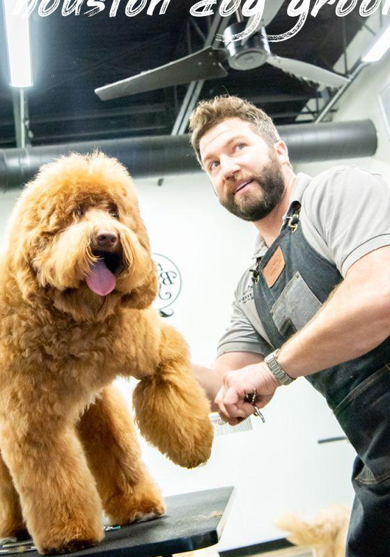 houston dog grooming Buyer