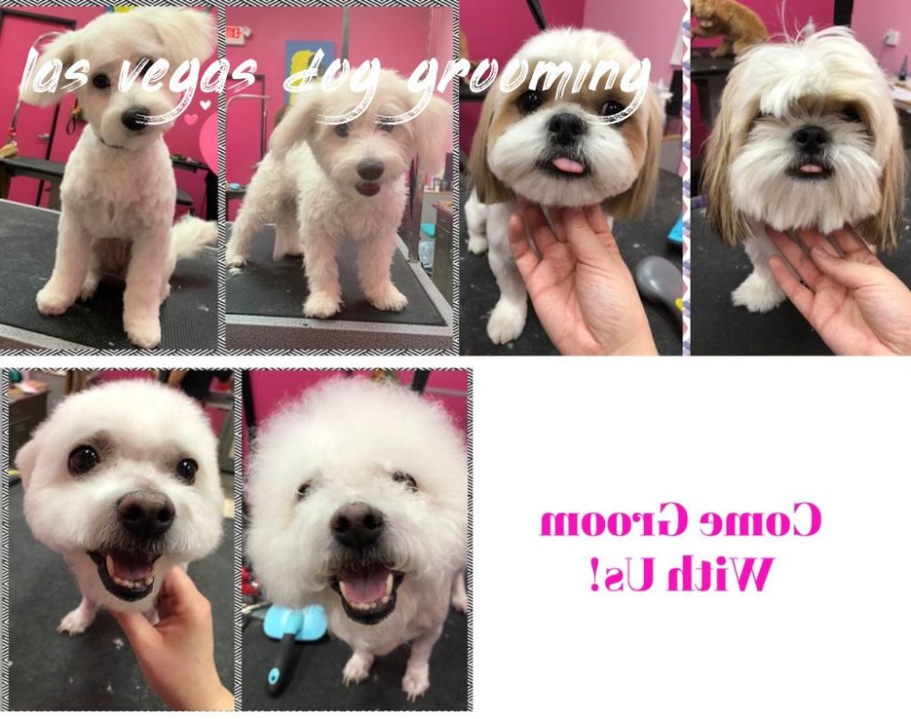 las vegas dog grooming How To Find