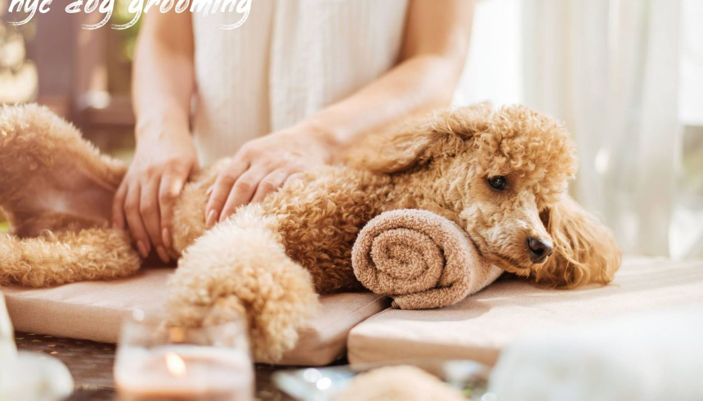 Nyc Dog Grooming Review