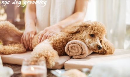 nyc dog grooming Recommended