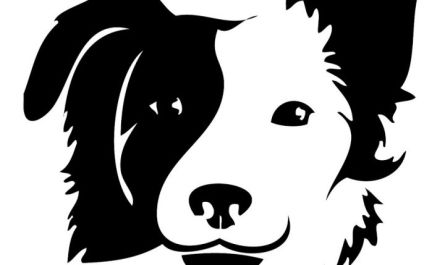 oklahoma city dog grooming