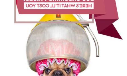 petsmart dog grooming prices Buyer