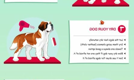 tips dog grooming Where To Find