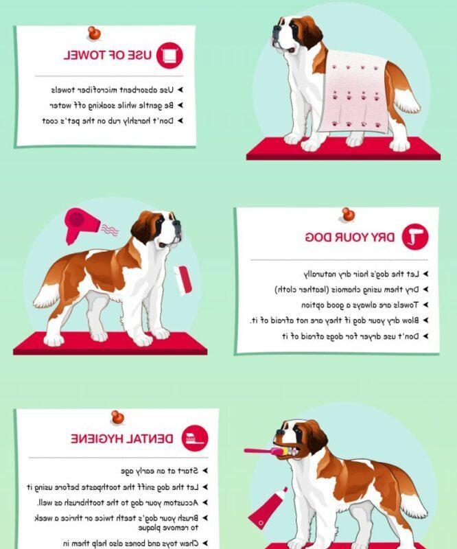 Tips Dog Grooming