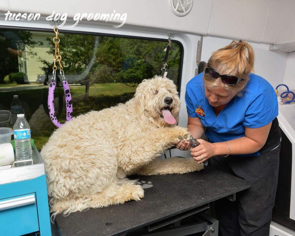 tucson dog grooming