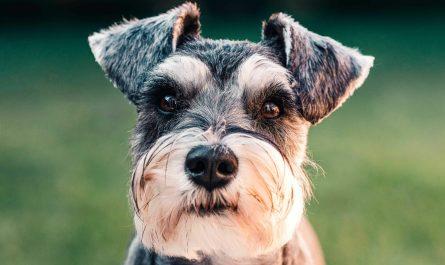 tulsa dog grooming Cost