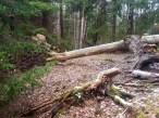 skogen10