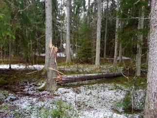 skogen14