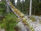 skogen15