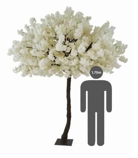 Cherry Tree White 2