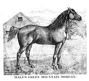 Morgan horse 1888