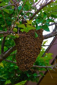 bees-1131460_640