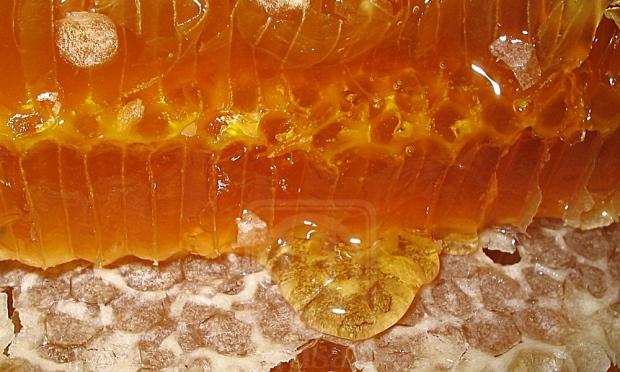 cara betul makan madu, cara betul beli madu, beli madu original, jangan beli madu tiruan, cara bezakan madu original dan tiruan, cara betul minum madu